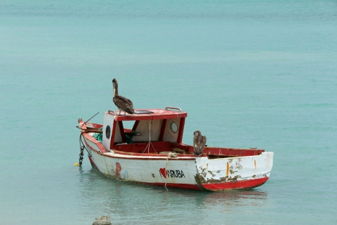 Pelicans in Oranjestad